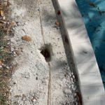 electrician-general-contractor-tamarac-33321-pool-grounding-handyman
